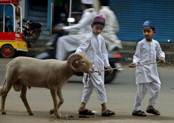 Anak-anak menuntun domba qurban  - qurban 01 - Berqurban, Mendekatkan Diri Kepada Allah dan Sesama
