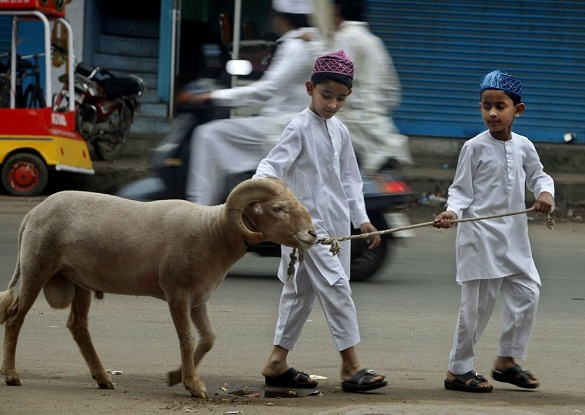 Anak-anak menuntun domba qurban