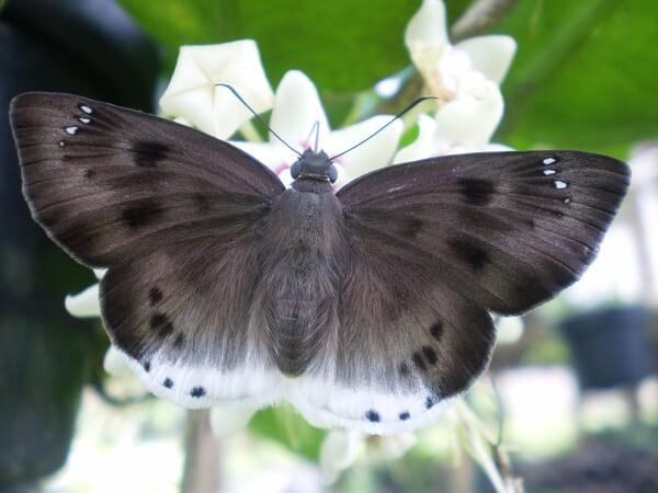 - P2130319 - Apa itu Biodiversitas?