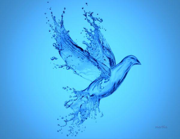 Air dan Makhluk Hidup