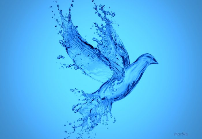Air dan Makhluk Hidup  - air dan makhluk hidup 700x480 - Air dan Makhluk Hidup