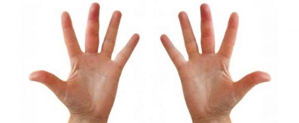 Telapak Tangan  - telapak tangan 600x247 - Mukjizat Jari Jemari